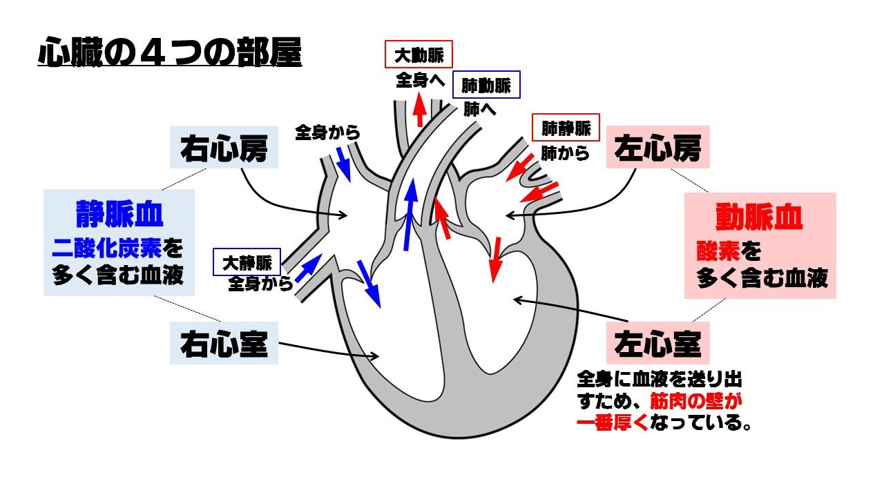 心臓の各名称