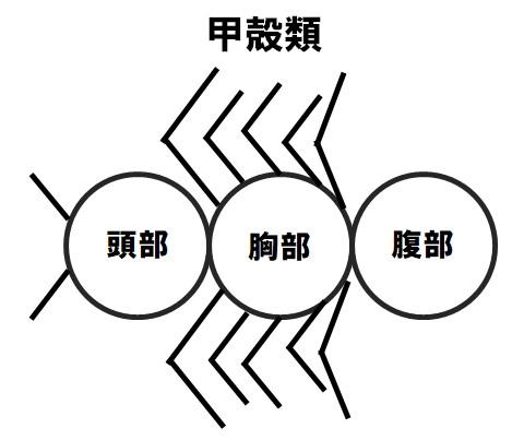 甲殻類からだのつくり(例)