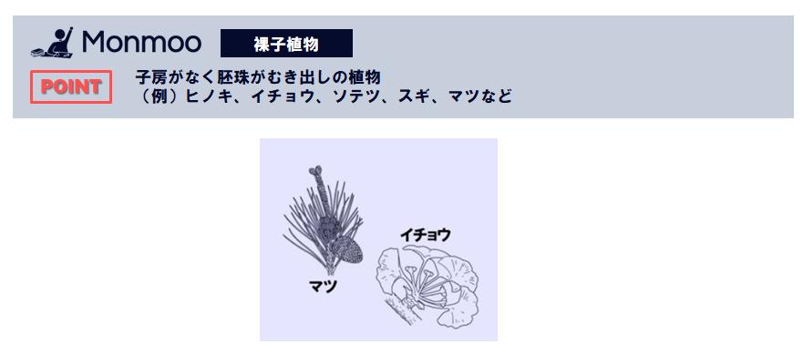 裸子植物(中学理科)