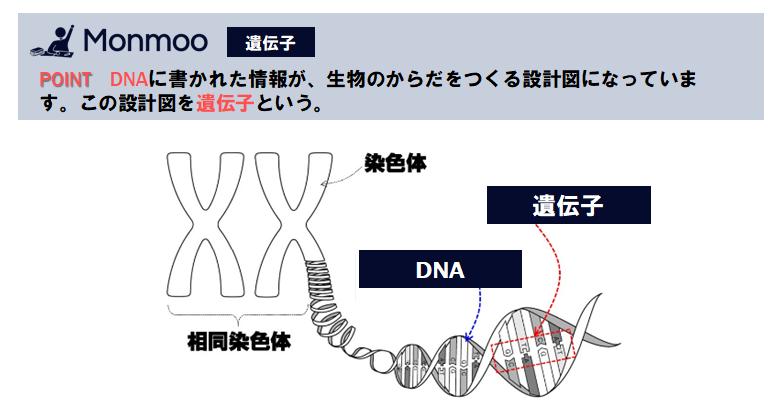 遺伝子(中学理科)