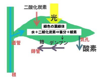 光合成のしくみ図