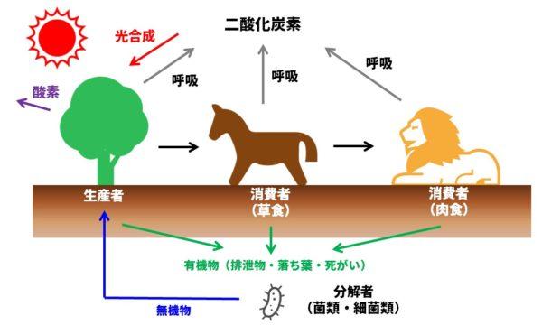 炭素の循環モデル図