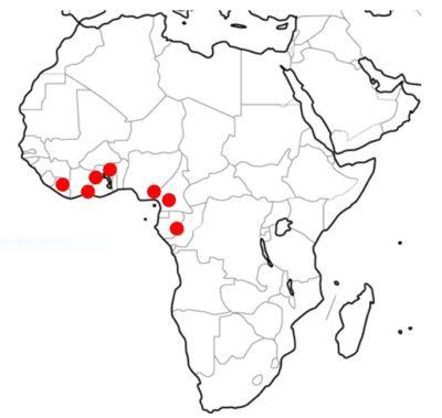 アフリカ州カカオの分布問題