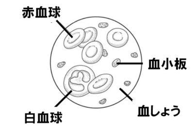 血液成分の模式図